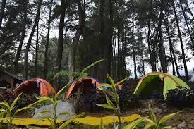 Pinus kalimati curug nangka